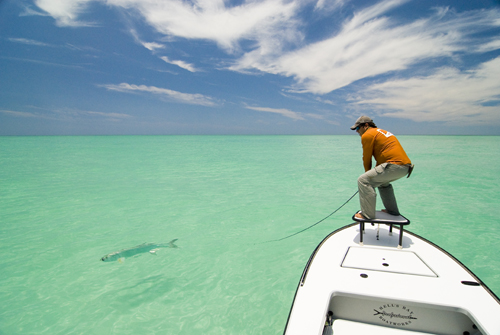 Fly fishing guide charters tampa bay saltwater tarpon for Fly fishing bay area
